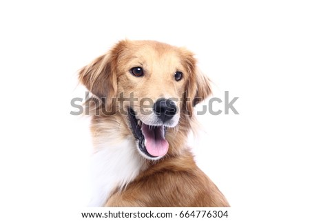 Beautiful dog #664776304