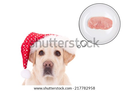 beautiful dog (golden retriever) in santa hat dreaming about food isolated on white background