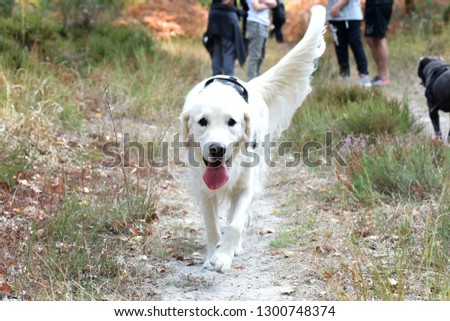 beautiful dog in forest #1300748374