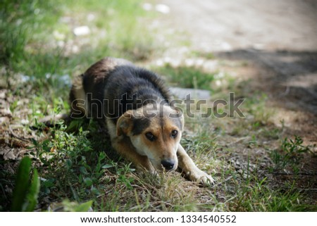 Beautiful dog on nature with sad eyes. Domestic animals in the nursery. Stock photo #1334540552