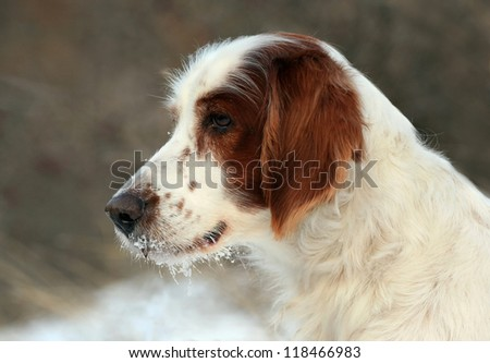 Beautiful dog portrait