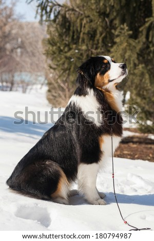 beautiful dogs on the big dog show