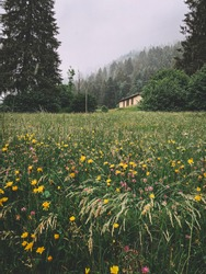 Beautiful Dolomites alps, fresh air in the forest, rainy day, wood house, relaxation landscape