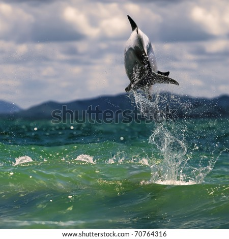 beautiful dolphin jumping up from sea surface