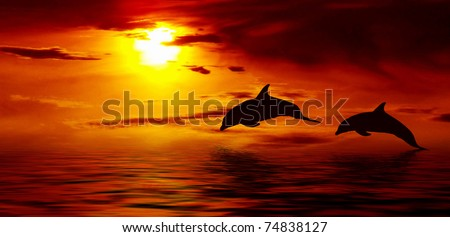 Beautiful dolphin jumping up from the ocean to the Sun at sunset time