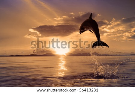 Beautiful dolphin jumping up from the ocean to the Sun at sunset time. Dolphin in orange background. Wild dolphin leaping.