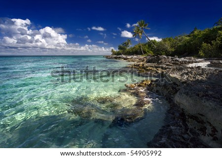 Beautiful Dominica beach with palm trees. Turquoise water - stock photo