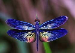 Beautiful dragonfly. Dragonflies of Thailand.