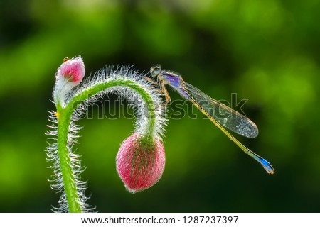 Beautiful dragonfly in the nature habitat  #1287237397