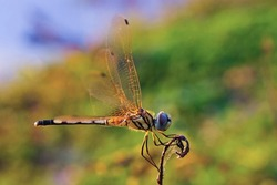 Beautiful dragonfly perched on a branch