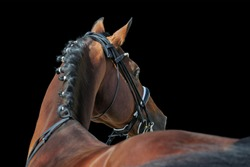Beautiful dressage stallion in double bridle isolated on black background