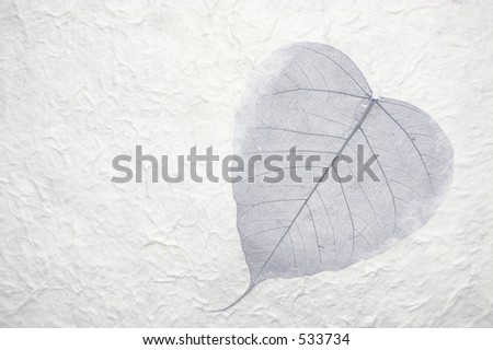 Beautiful dried leaf placed in hand made paper