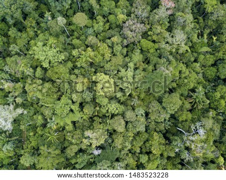 Beautiful  drone aerial view of tree tops of brazilian amazon primary rainforest in summer sunny day. Concept of conservation, ecology, biodiversity, global warming, environment and climate change.