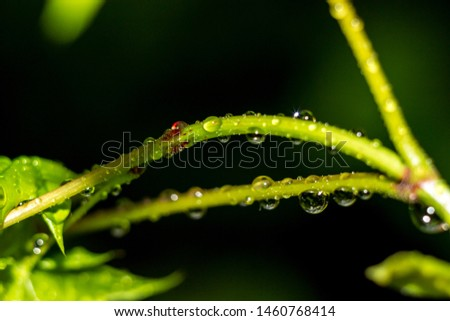 Beautiful drops on the stem of the plant after the rain #1460768414