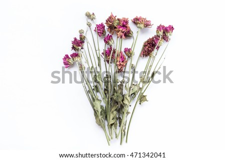 Stock Photo Beautiful dry flower on white background