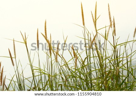 Beautiful dry grass in Sunset on the mountain.Rural Scenery under Shining Sunlight. #1155904810