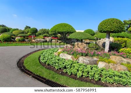Beautiful dwarf tree in the garden in Thailand #587956991