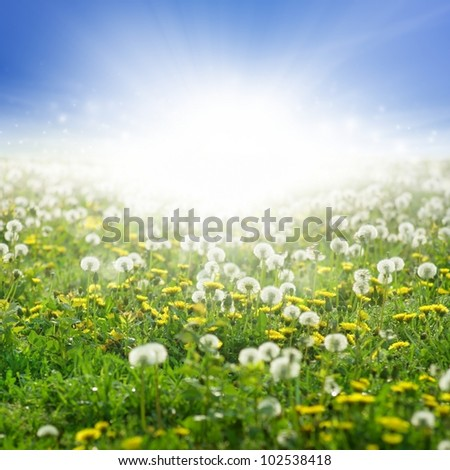 Beautiful eco background - field of blooming dandelions, green grass, bright sun, blue sky