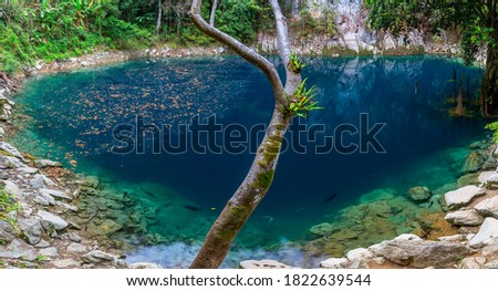 Beautiful emerald pool in Rain forest at Lom Phu Khiao ,Tham pha tai NationalPark,Thailand Stock fotó ©