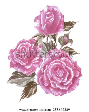 Beautiful English Tea Roses Watercolor Painting Realistic Hand