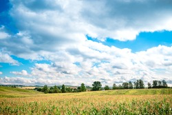 Beautiful environment landscape of green field cornfield, Corn field and sky with beautiful clouds, cornfield, Rolling field of corn with siloes, blue sky