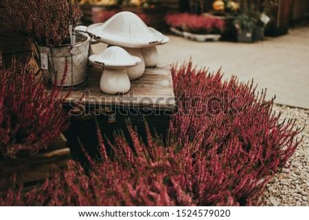 Beautiful Erica carnea ( winter heath, winter-flowering heather, spring alpine heath ) pink Flowers. Flowering Ornamental plants and ceramic decorative mushrooms for home decor. Selective focus.  #1524579020