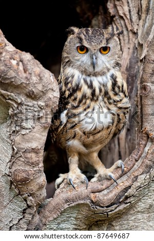 Beautiful European eagle owl in a tree hollow