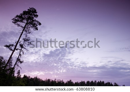 beautiful evening sky and the silhouette of a tree
