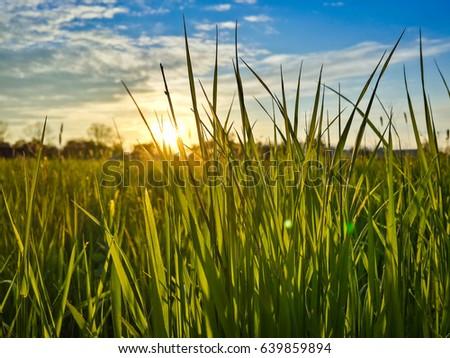 Beautiful evening sunset over green field #639859894