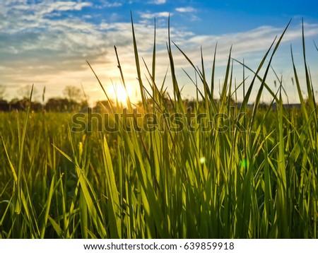 Beautiful evening sunset over green field #639859918
