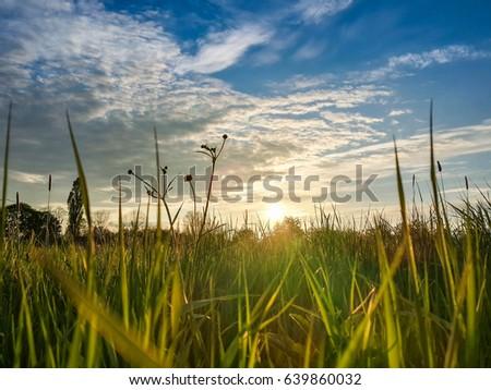 Beautiful evening sunset over green field #639860032