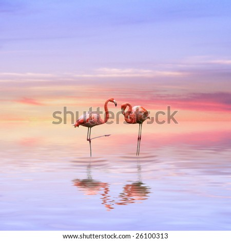 beautiful evening with Flamingos in love