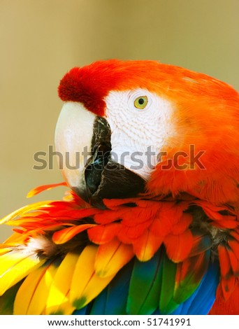 Beautiful exotic parrot in zoo. Red Macaw (Ara ararauna)