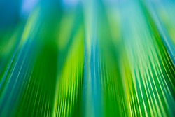 Beautiful exotic pattern of green tropical palm leaves