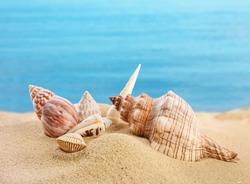 Beautiful exotic sea shells on sandy beach