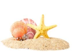 Beautiful exotic shells and starfish on sand background