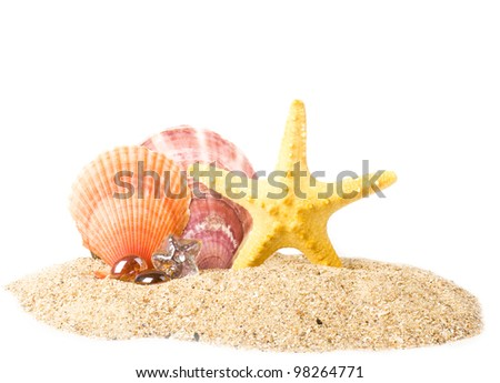 Beautiful exotic shells and starfish on sand background - stock photo