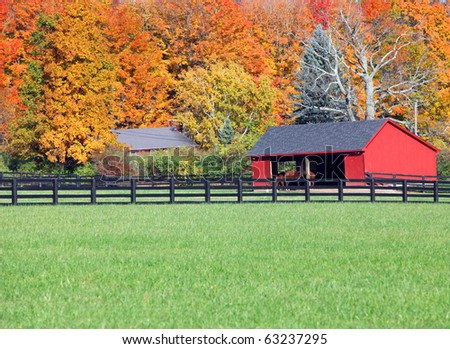 Beautiful fall background to horses in a stable