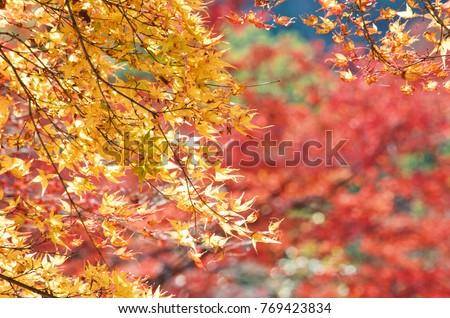 Beautiful Fall colors  #769423834