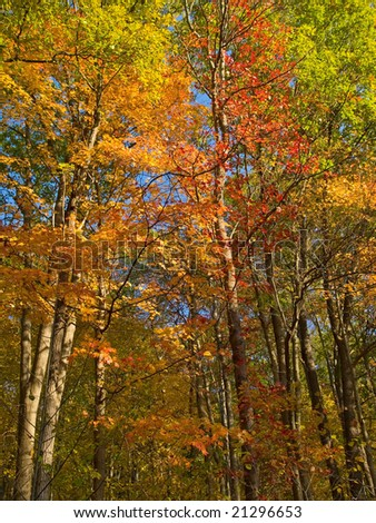 Beautiful Fall colors can be found in mid October in Delaware Water Gap National Recreation Area.