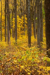 Beautiful fall foliage along Skyline Drive in Shenandoah National Park