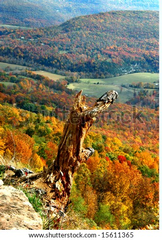 Beautiful fall foliage covers valley.  Rotting tree stump has box office seat at mountain top.