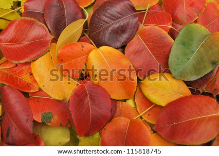 Beautiful Fall foliage in a colorful arrangement.