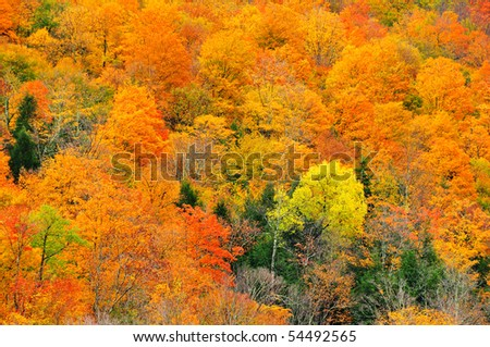 Beautiful fall orange trees on vermont mountainside