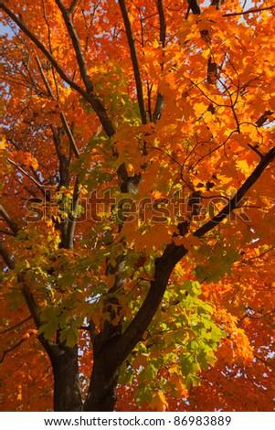 Beautiful Fall scenery in Upstate New York.