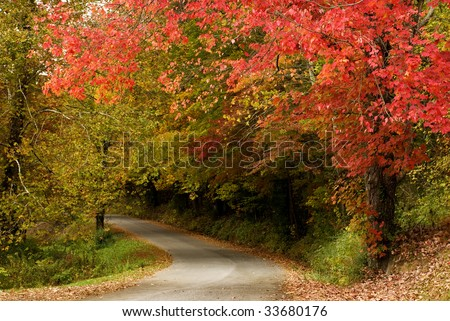 Beautiful fall trees with curving road, horizontal with copy space - stock photo