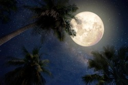 Beautiful fantasy of palm tree at tropical beach and full moon with milky way star in night skies background. Retro style artwork with vintage color tone