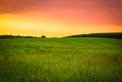 Beautiful farm field with grass and corn at sunset, Amish country, Lancaster Pennsylvania