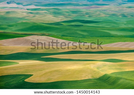 Beautiful Farmland Patterns Seen From Steptoe Butte, Washington. High above the Palouse Hills on the eastern edge of Washington, Steptoe Butte offers unparalleled views of a truly unique landscape. #1450014143