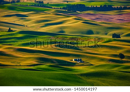 Beautiful Farmland Patterns Seen From Steptoe Butte, Washington. High above the Palouse Hills on the eastern edge of Washington, Steptoe Butte offers unparalleled views of a truly unique landscape. #1450014197